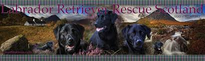 Labrador Retirever Rescue Scotland