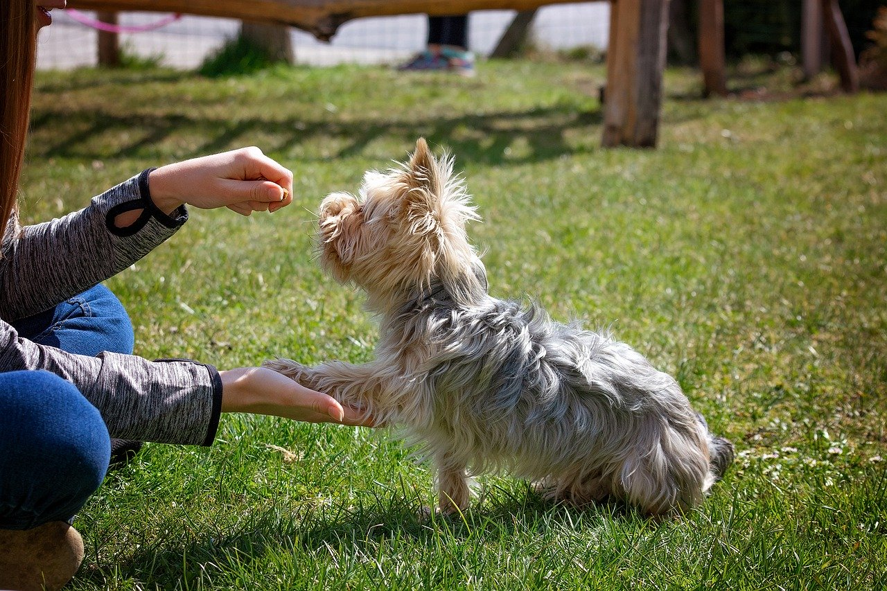 outdoor beginners class with small dog siting with owner on grass